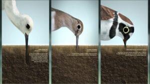 Tri vrste ptica muljaju po tlu, Multimedijska instalacija, Promotivni film, 3D animacija